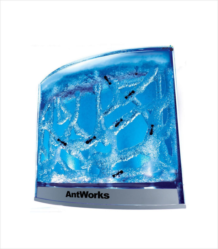 Science toys for kids - AntWorks