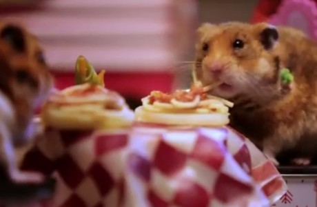 tiny hamsters going on Valentine's date - 2