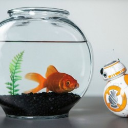 BB-8 Star Wars Droid by Sphero Set to Be a Top Toy for Christmas